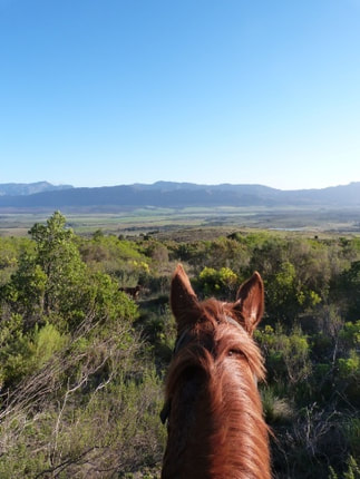 Breedekloof Horse Trails