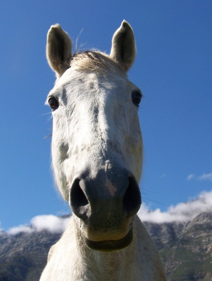 Horse riding parties perfect for pre-wedding hen or stag does in the Tulbagh wine region near Cape Town