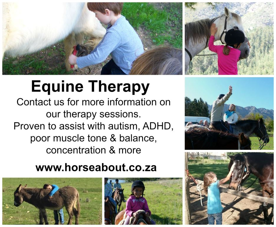 Equine Therapy lessons