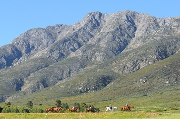 Horse Trail Riding Cape Town